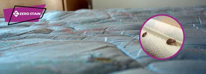 Dust Mites Removal From Mattress